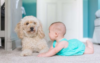 Are You Having Your Carpets Professionally Cleaned Often Enough?