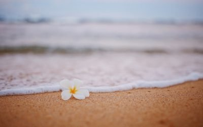 Why Spring Is The Perfect Season For Hawaii Carpet Cleaning
